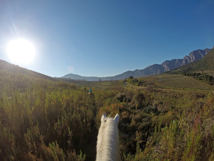 Horse+Riding.jpg