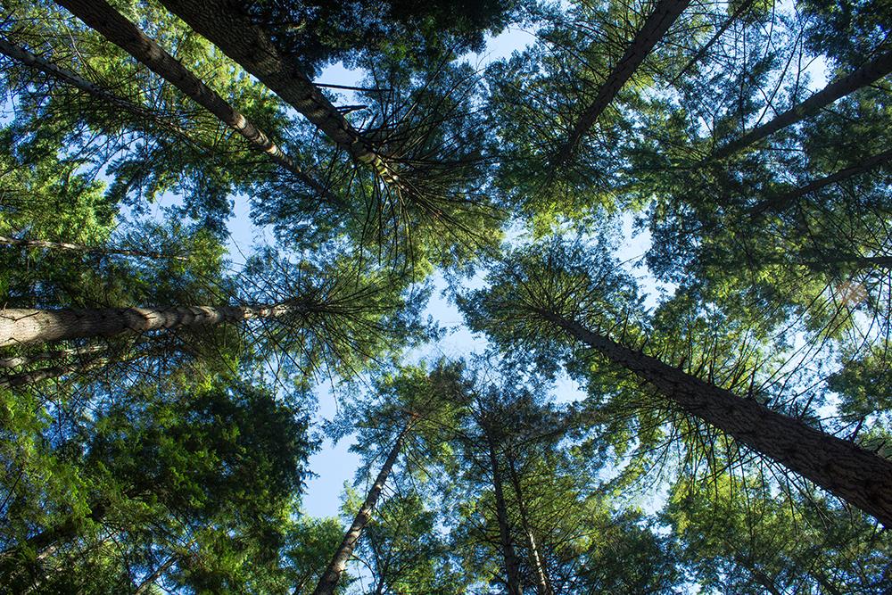 trees_00000.jpg