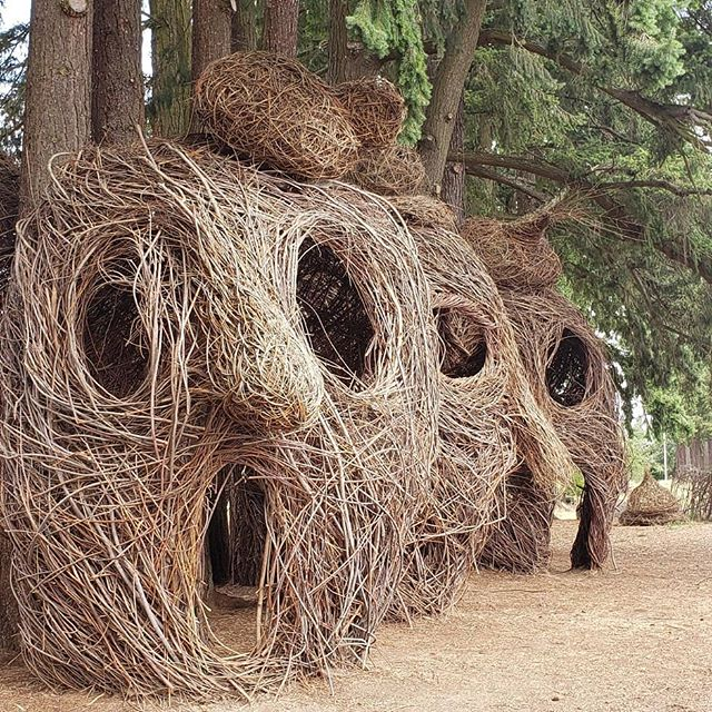 A  little deviation from the normal routine to check out these amazing natural sculptures by artist #patrickdougherty.