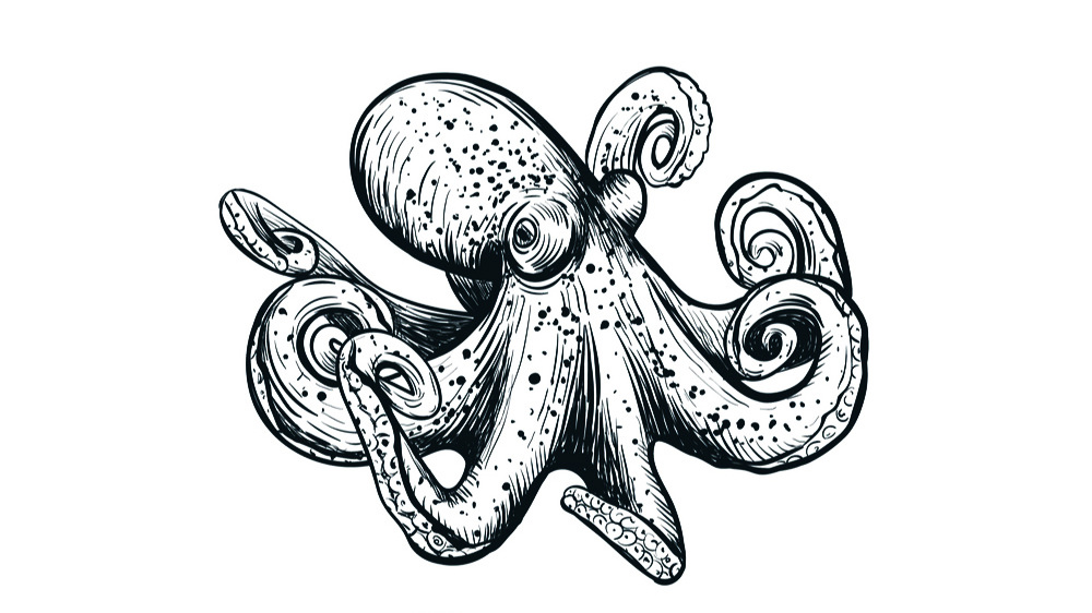 octopus-sketch-hand-drawing-vector-21284072.jpg