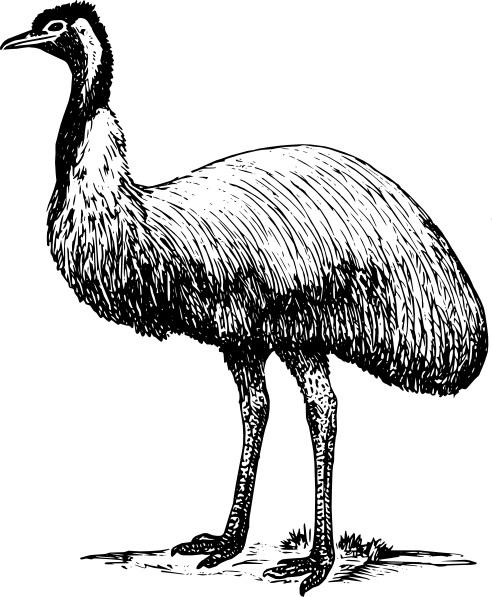 USA-Sourced Emu -