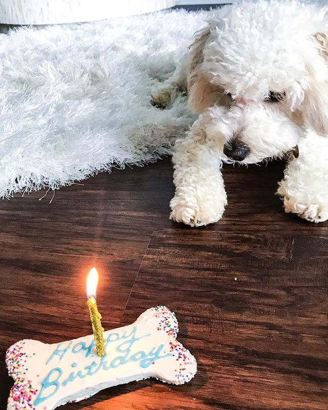 Happy First Birthday to my favorite little human! Yes, I said human. Sometimes I forget Asher isn't really a human.😩 Thank you for all the joy and laughter you bring to my life. I'll be a bad mommy today and let you eat this entire bone. Love you little baby! 💙 • • • • • • #birthday #birthdayboy #puppy #dogsofinstagram #dogsofig #dogmom #dogmommy #blogger #blog #lifestyle #lifestyleblogger