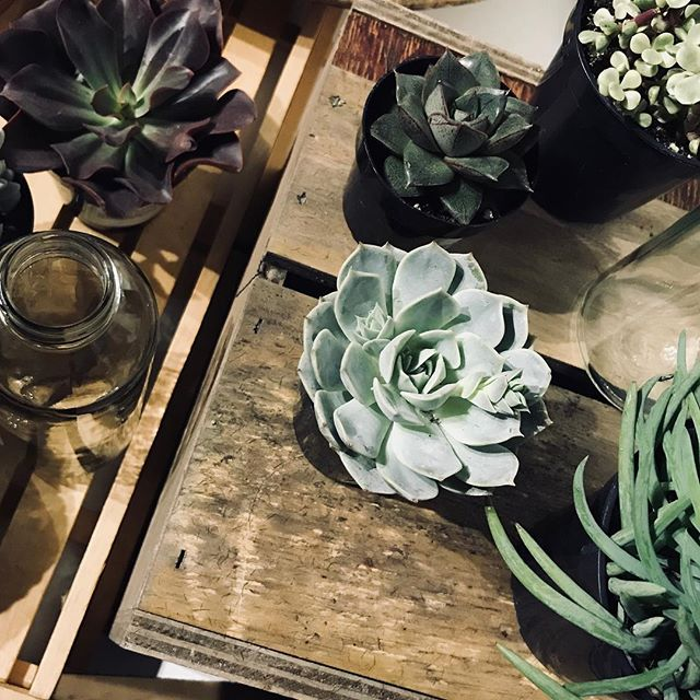 Here's a sneak peek of our plant bar!! We are officially open starting February 1st!! Pop in to create your own little green treat 😉  #plantbar #gardening #greenbeauty