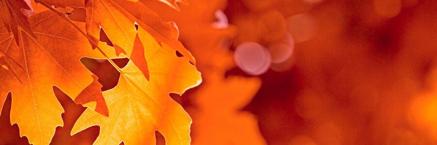 autumn cropped.jpg