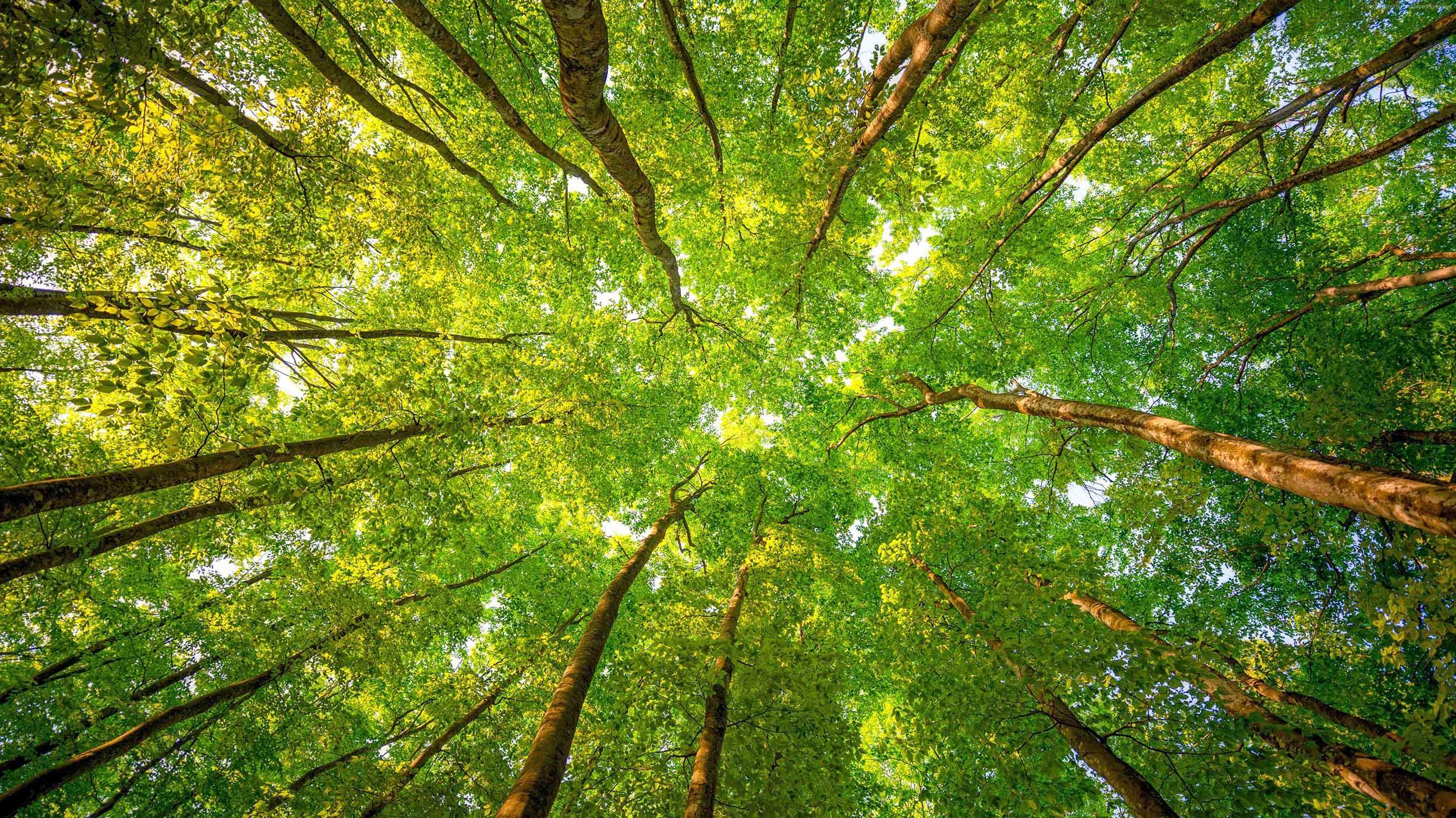 Blaze-Bernstein-Trees.jpg