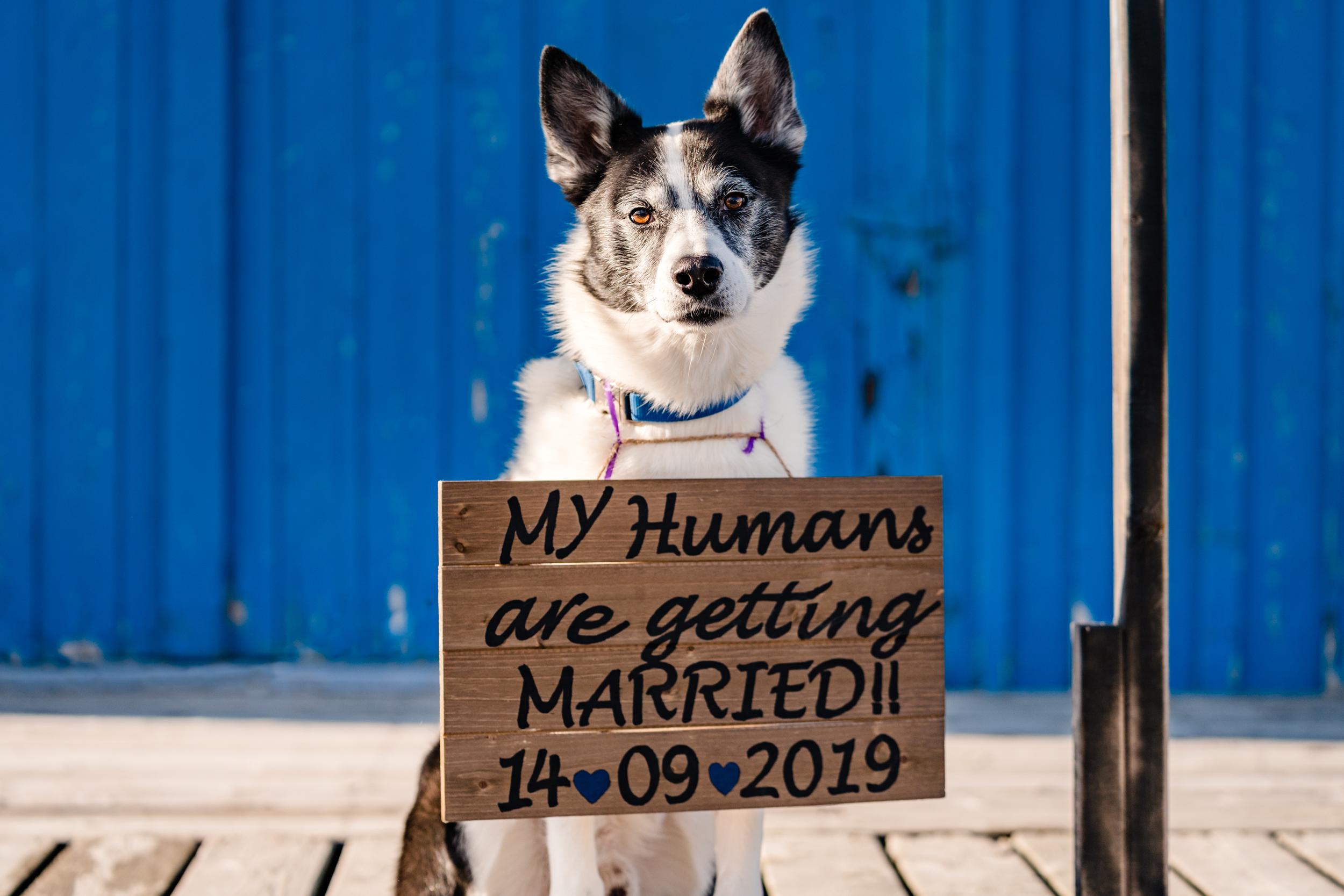 Sarah&Shayne-Halifax-engagement-weddingphotography-weddingphotographers-novascotia (1 of 41).jpg