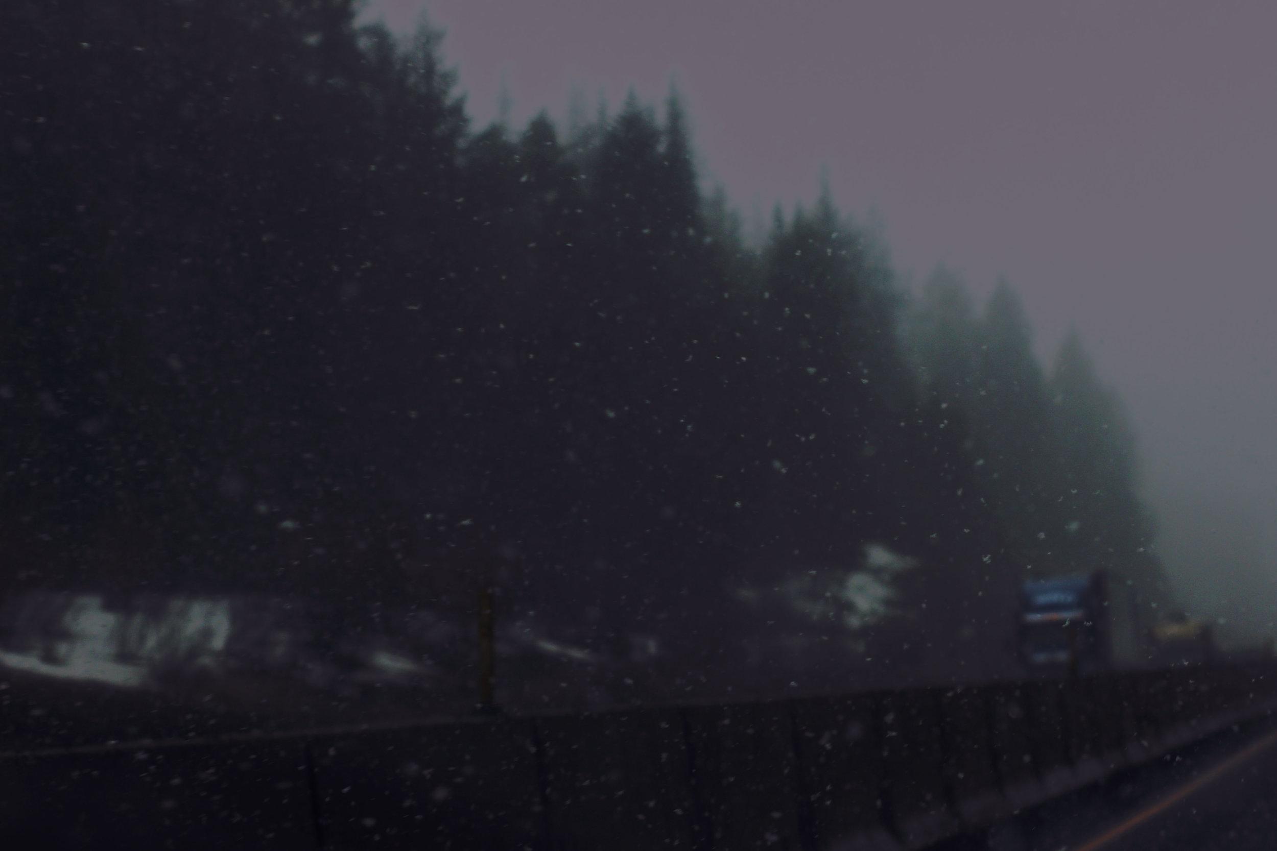 snowy woods 2.jpg