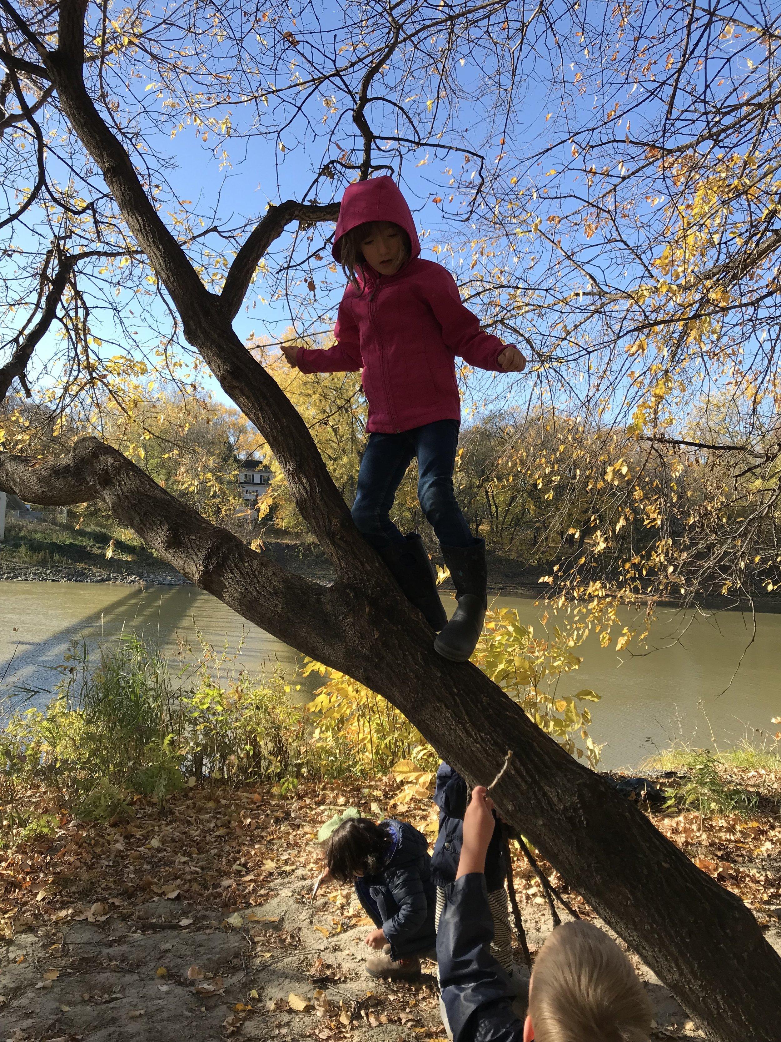 kids in tree.jpg