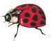 Crawling-Ladybug-75px.jpg
