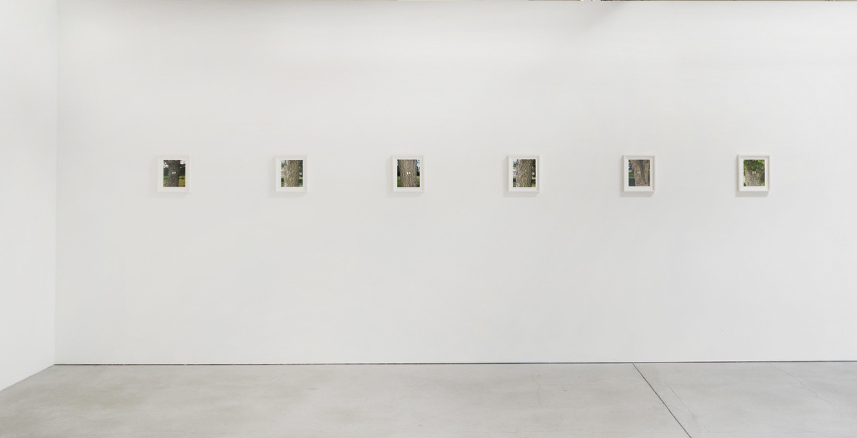 Tree Labels, installation view, Natural Light 2019