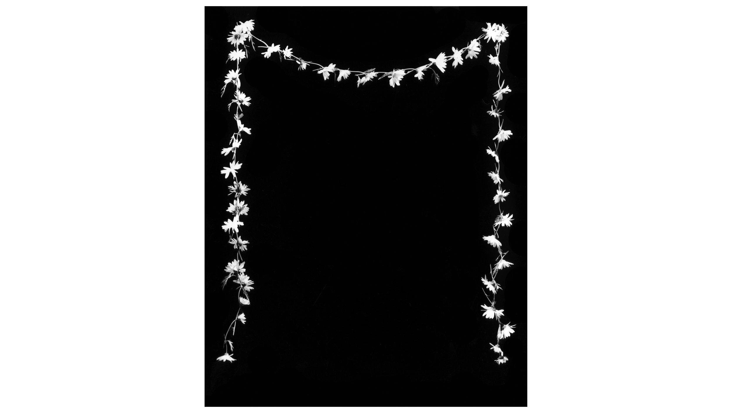 daisy chain web.jpg