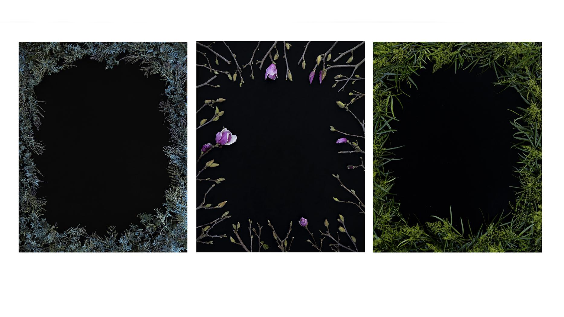 foliage web.jpg