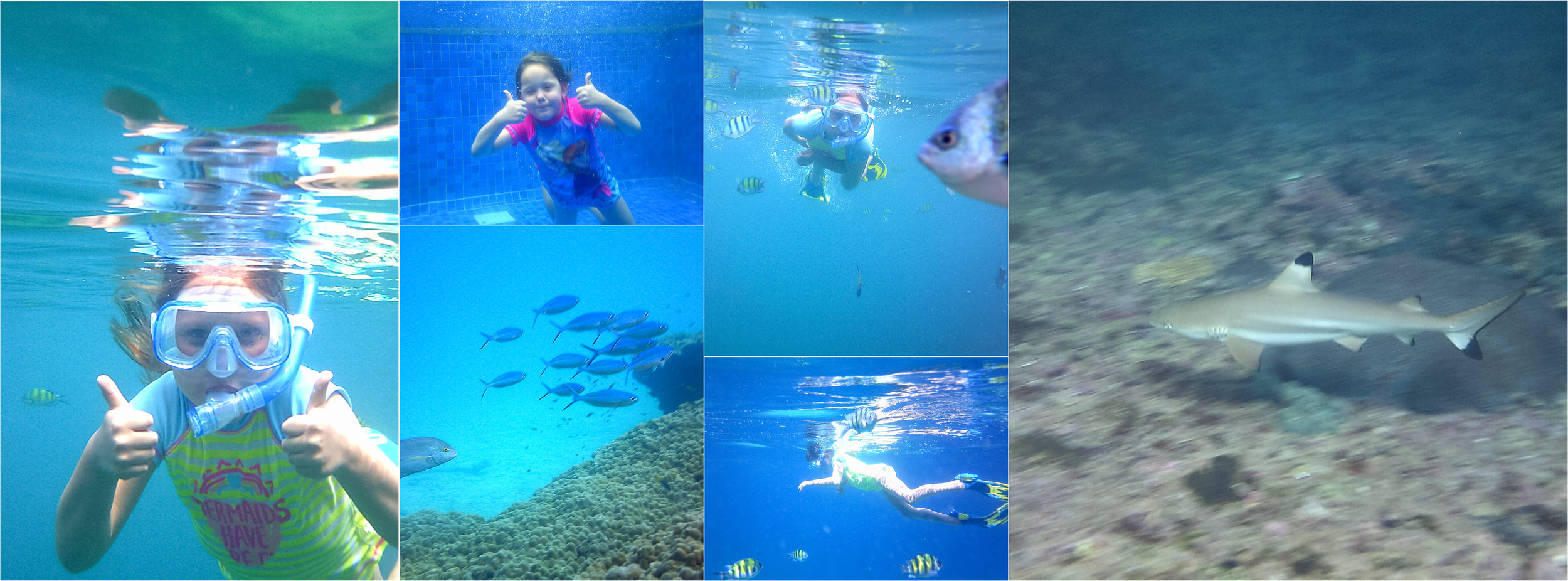 This was Piper's second time snorkeling and she did great! The Thai team on the boat couldn't believe how well she could swim and that she just jumped in and off she went. What a great snorkeling trip, we found a baby shark nursery (baby shark doo doo doo doo doo doo!) with 7 baby black tip reef sharks. I was in heaven!!