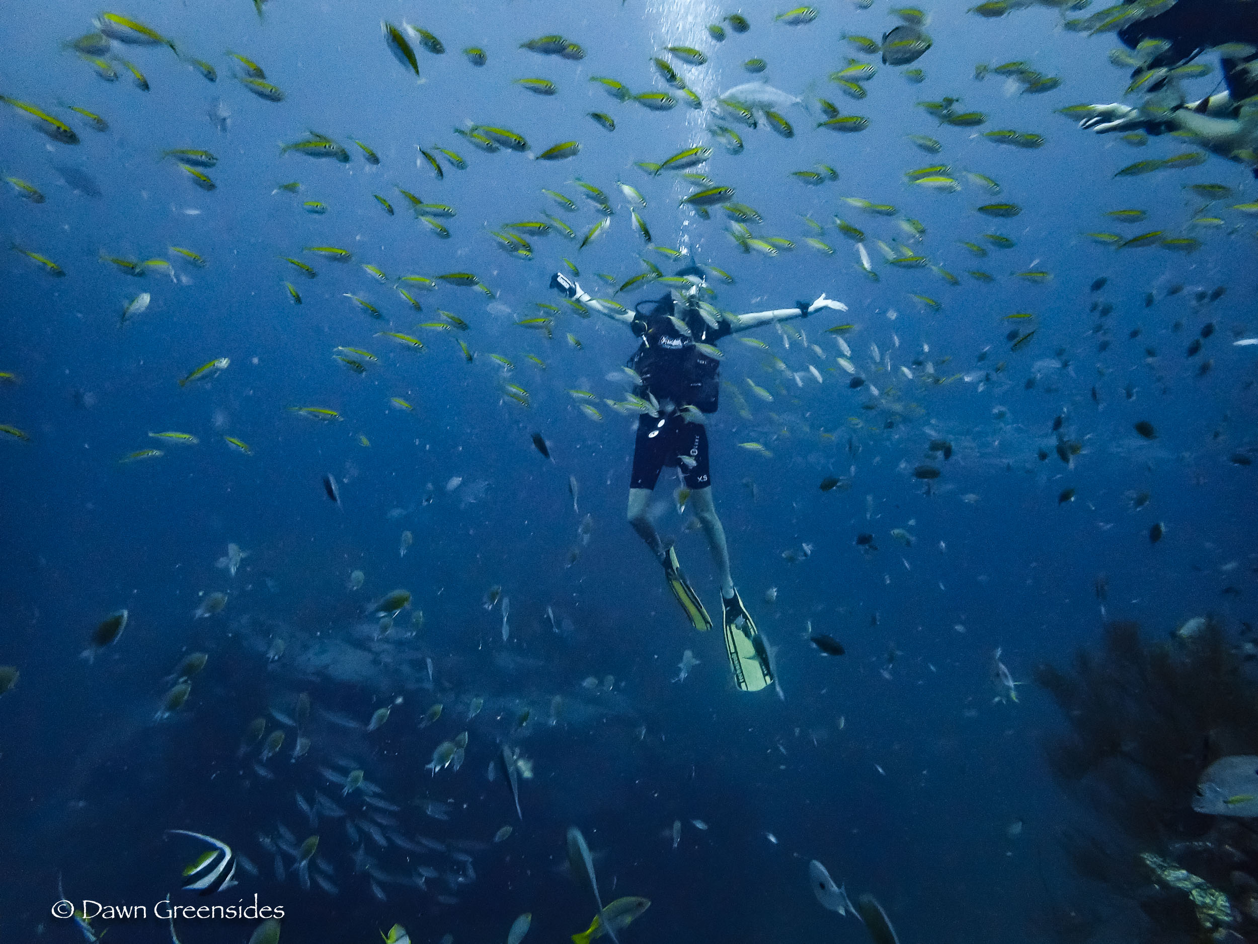 In my happy place! (Our divemaster had her own camera so I finally have some pictures of me underwater!)