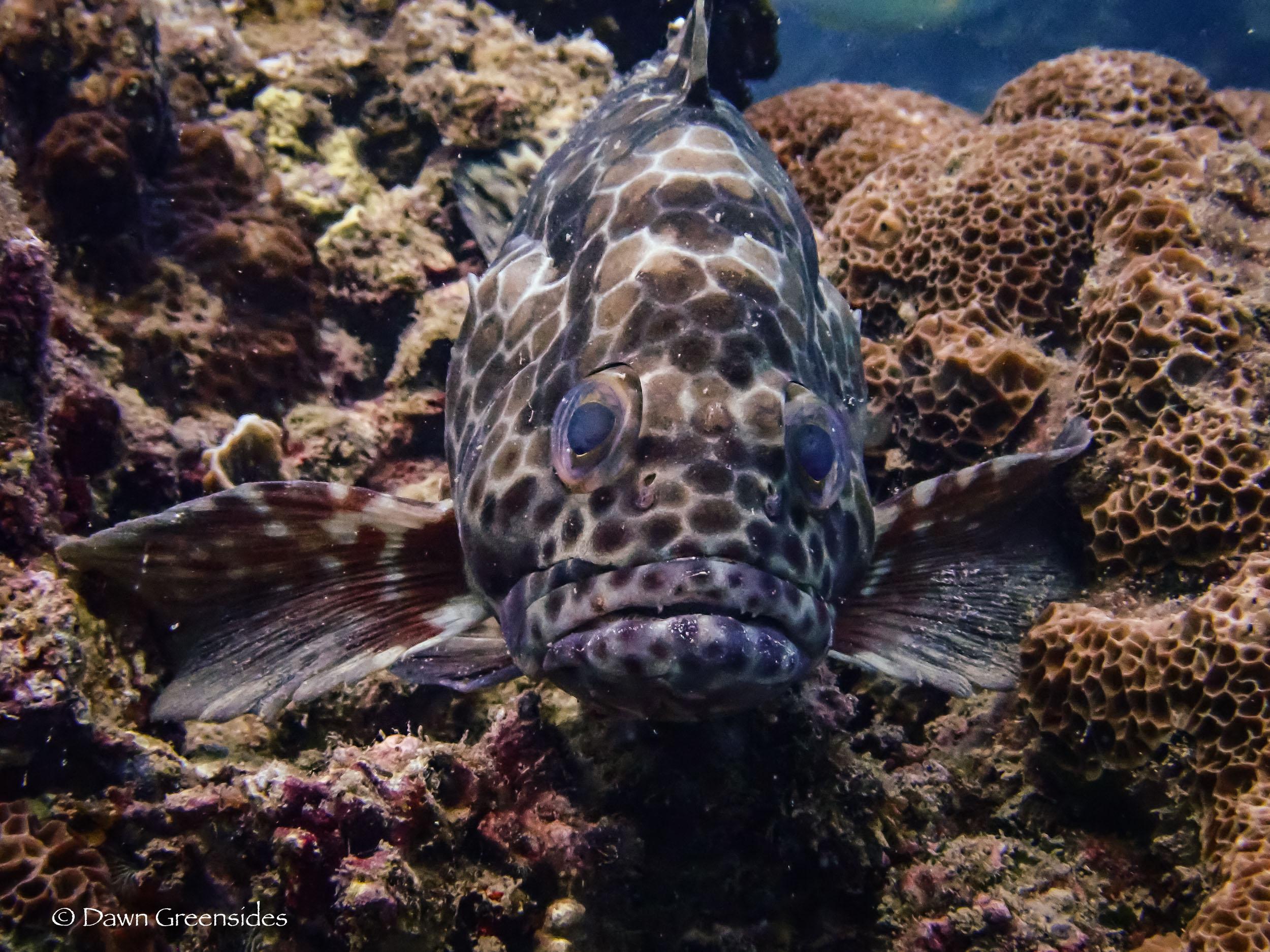 Diving-4.jpg