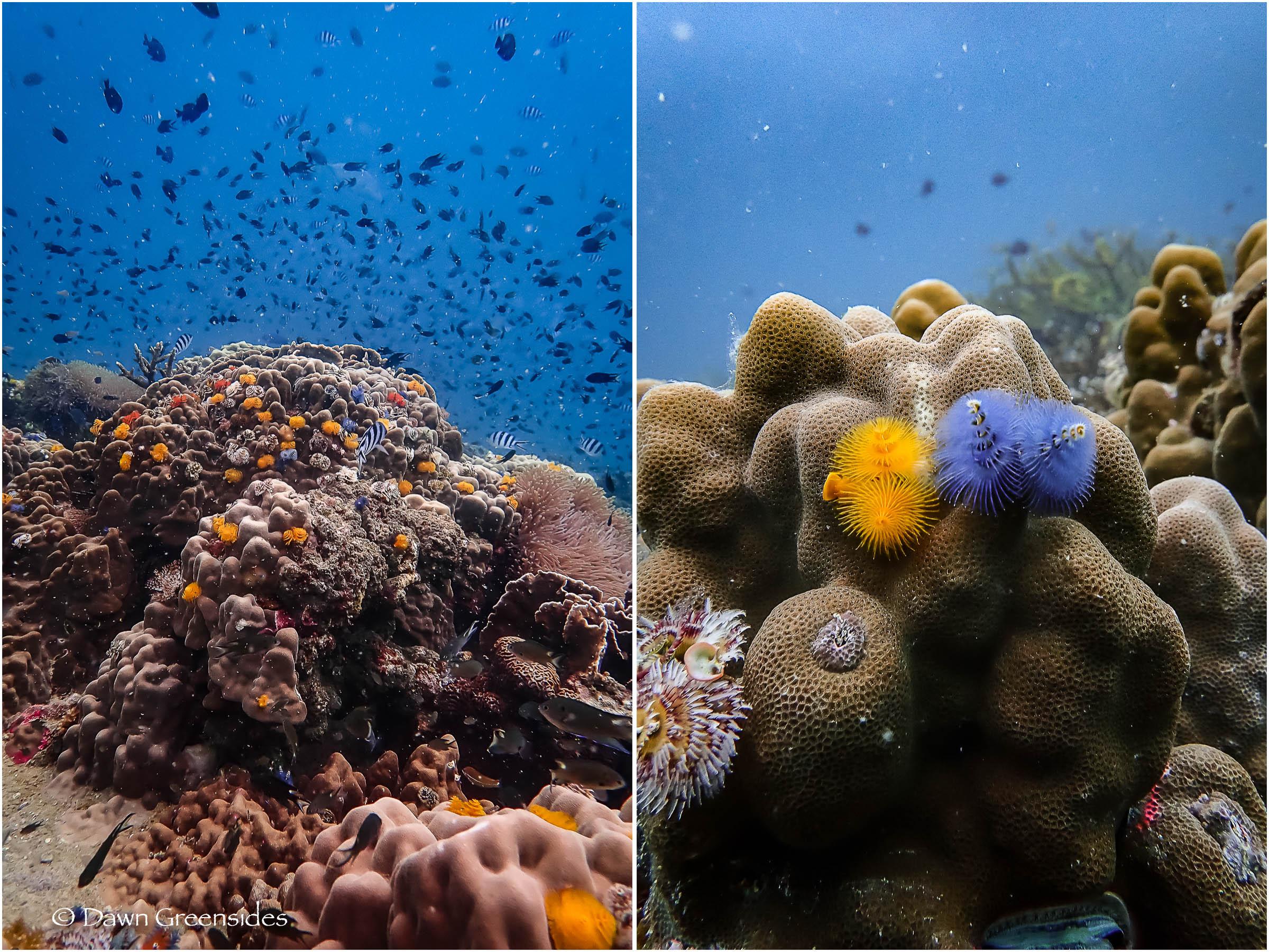 Diving-7.jpg