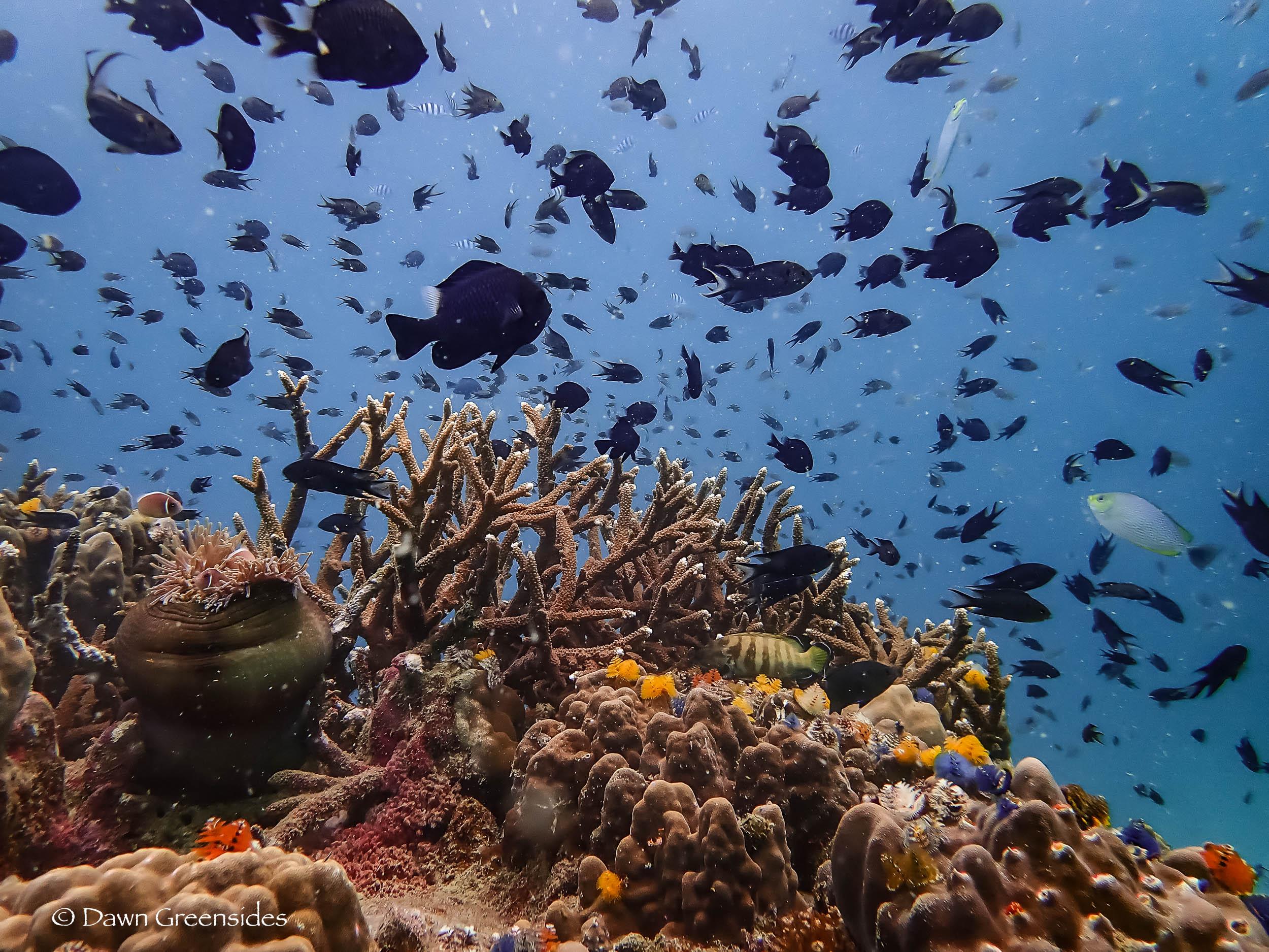 Diving-11.jpg
