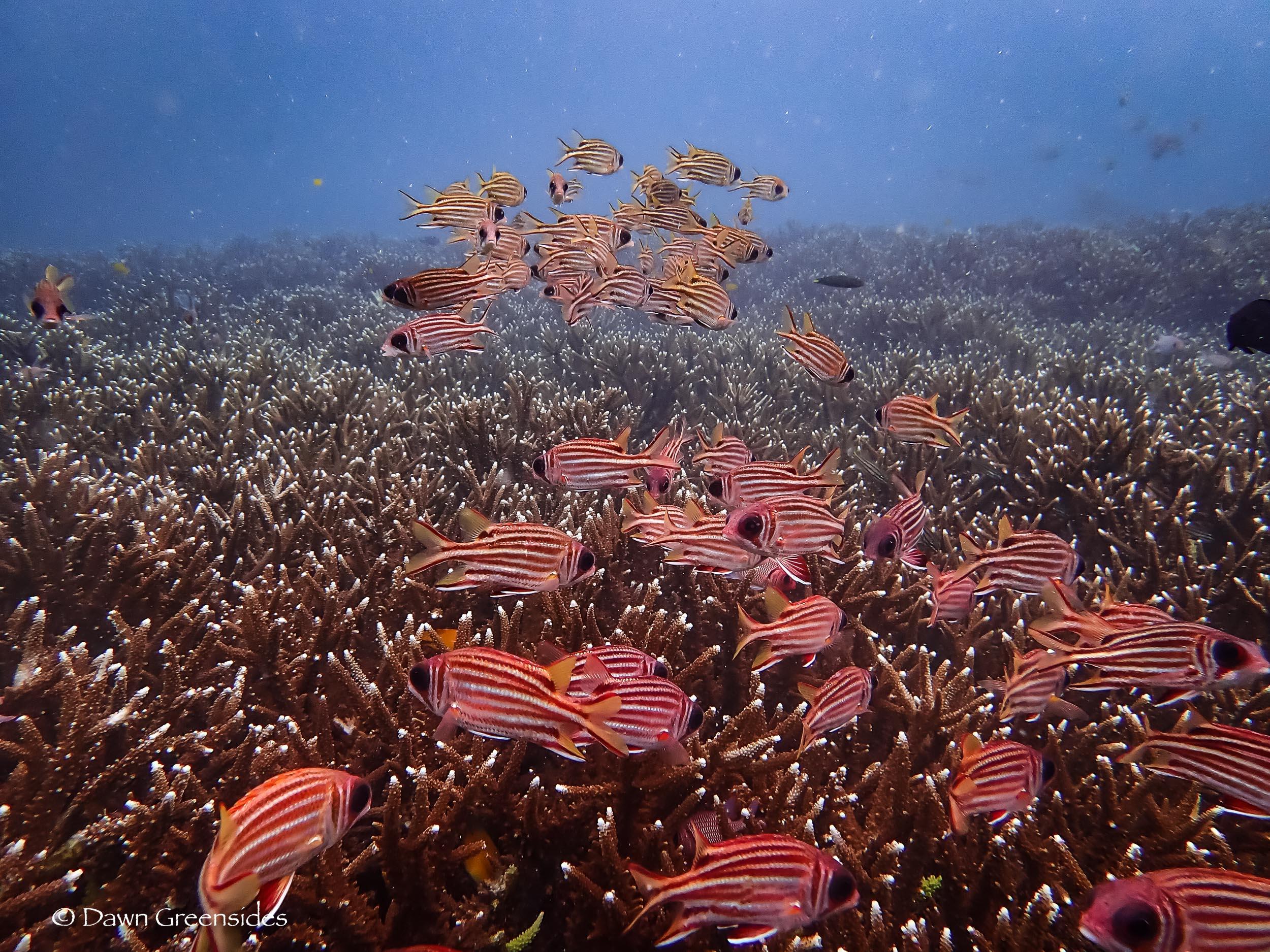 Diving-12.jpg