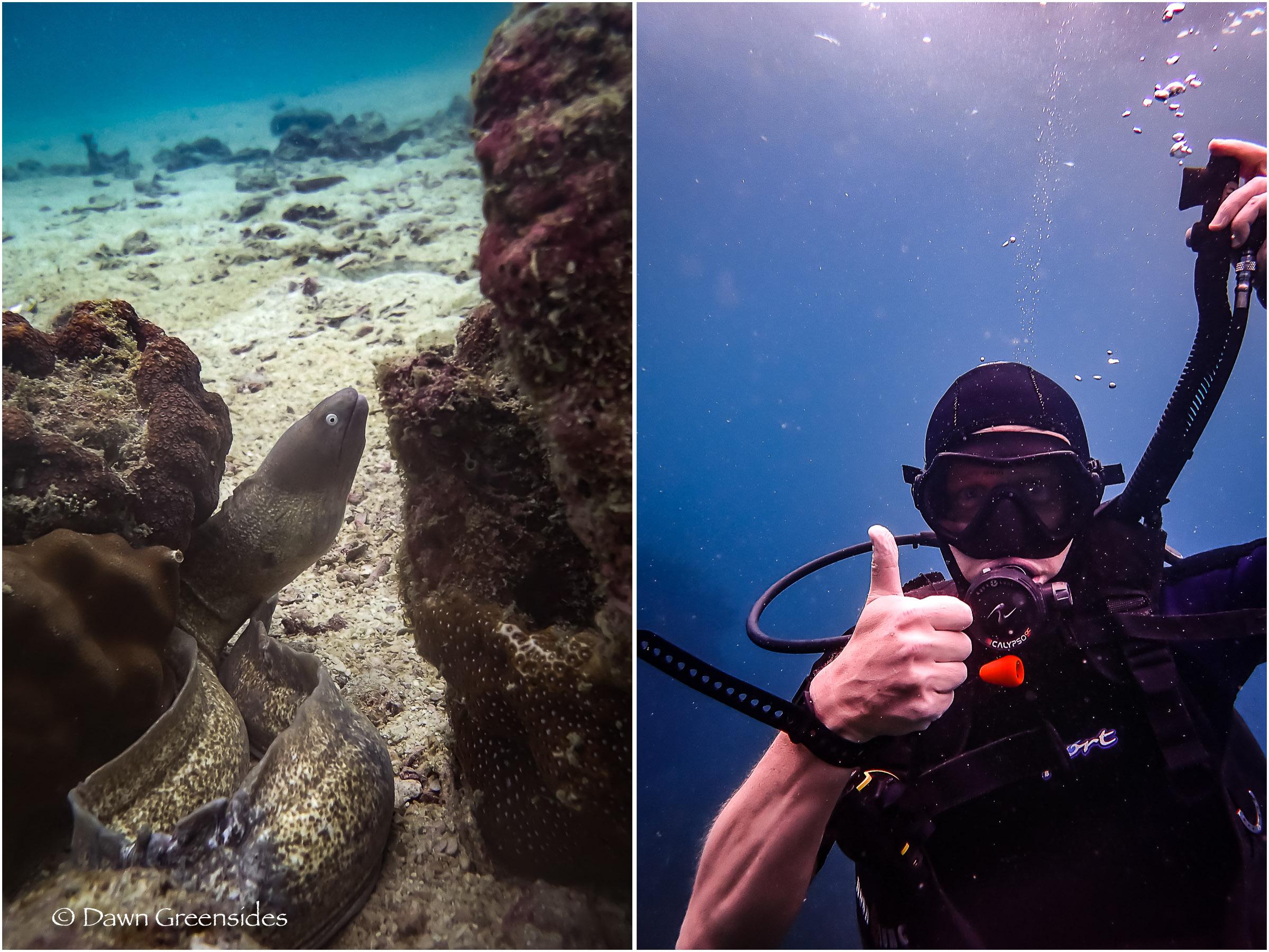 Diving-13.jpg
