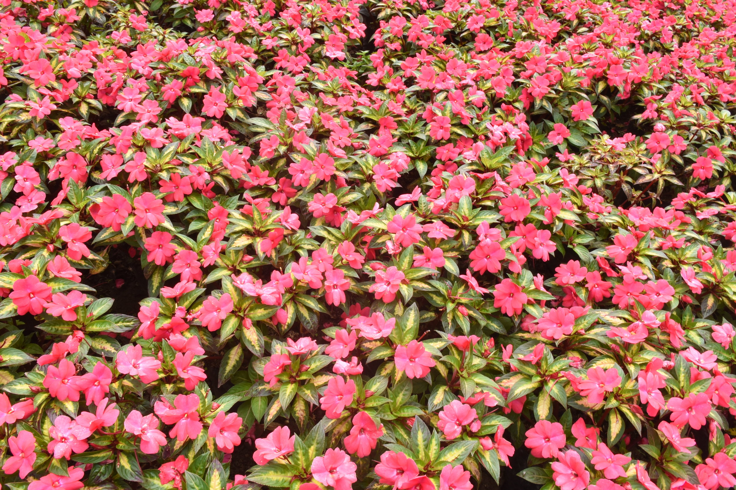 Flowering plants in the Electric Garden