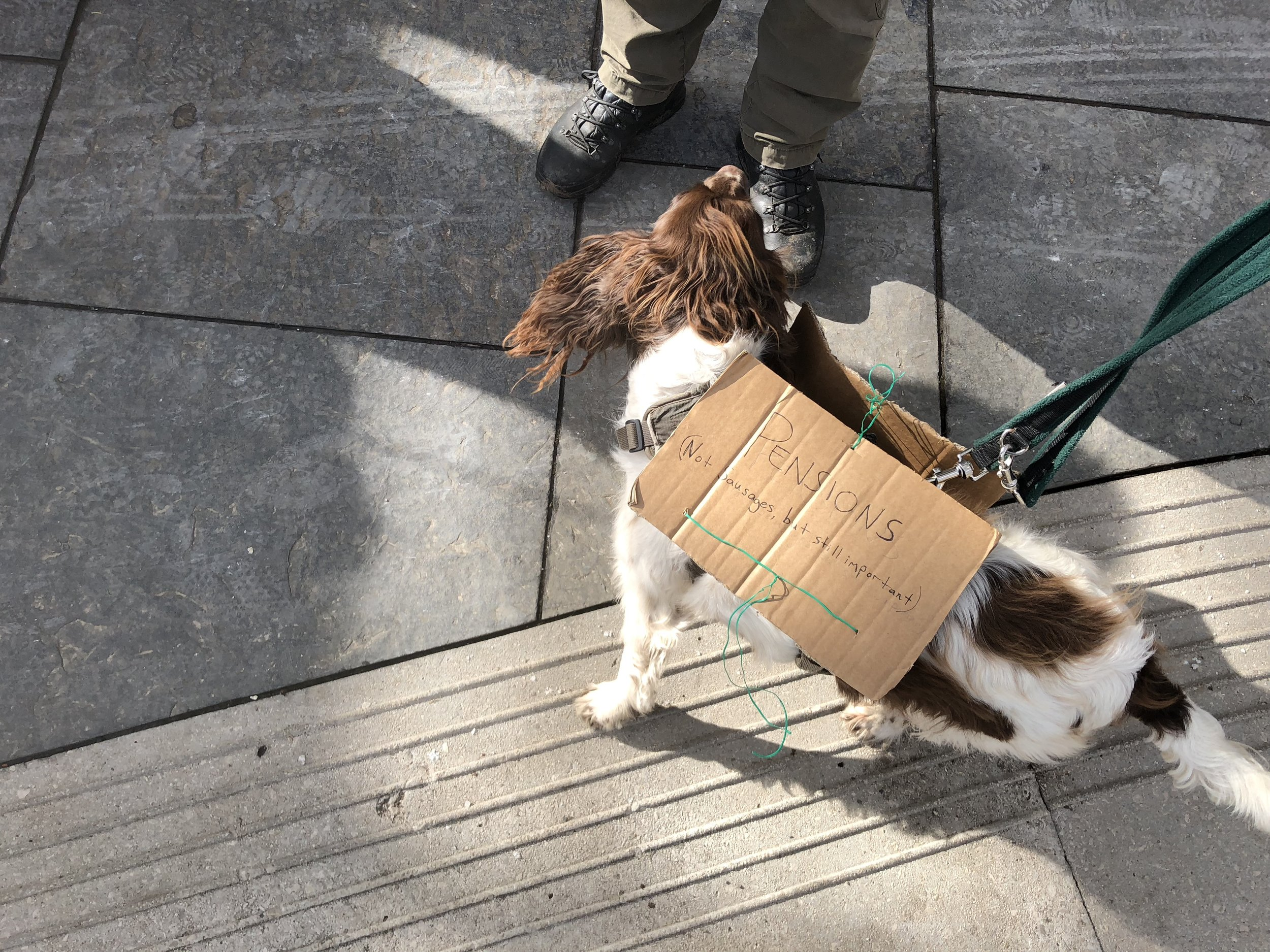 An excellent strike dog at the All-Scotland UCU Rally outside Scottish Parliament, Thursday 8 March