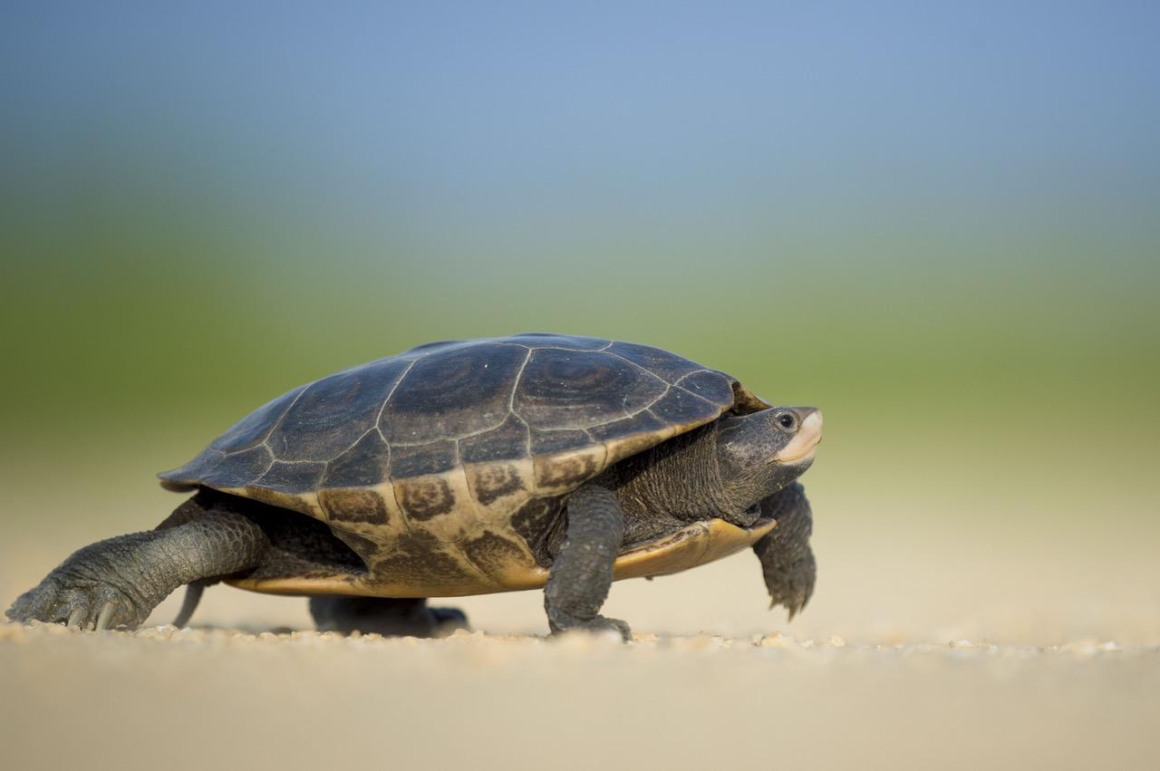 tortoise.jpeg