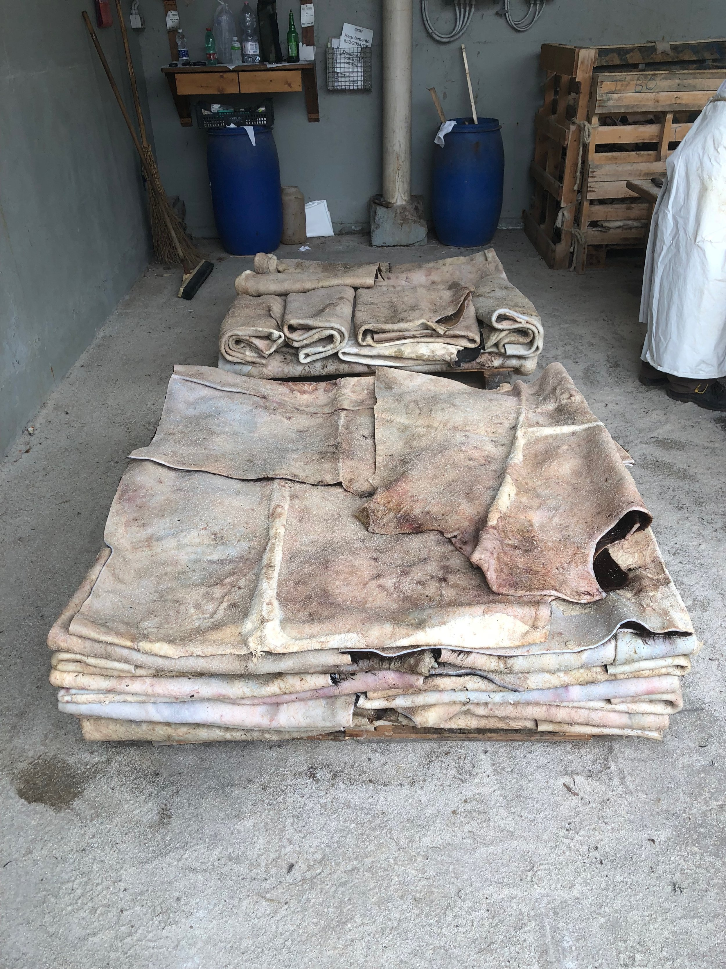 Animal skin before it is prepared for tanning to make leather
