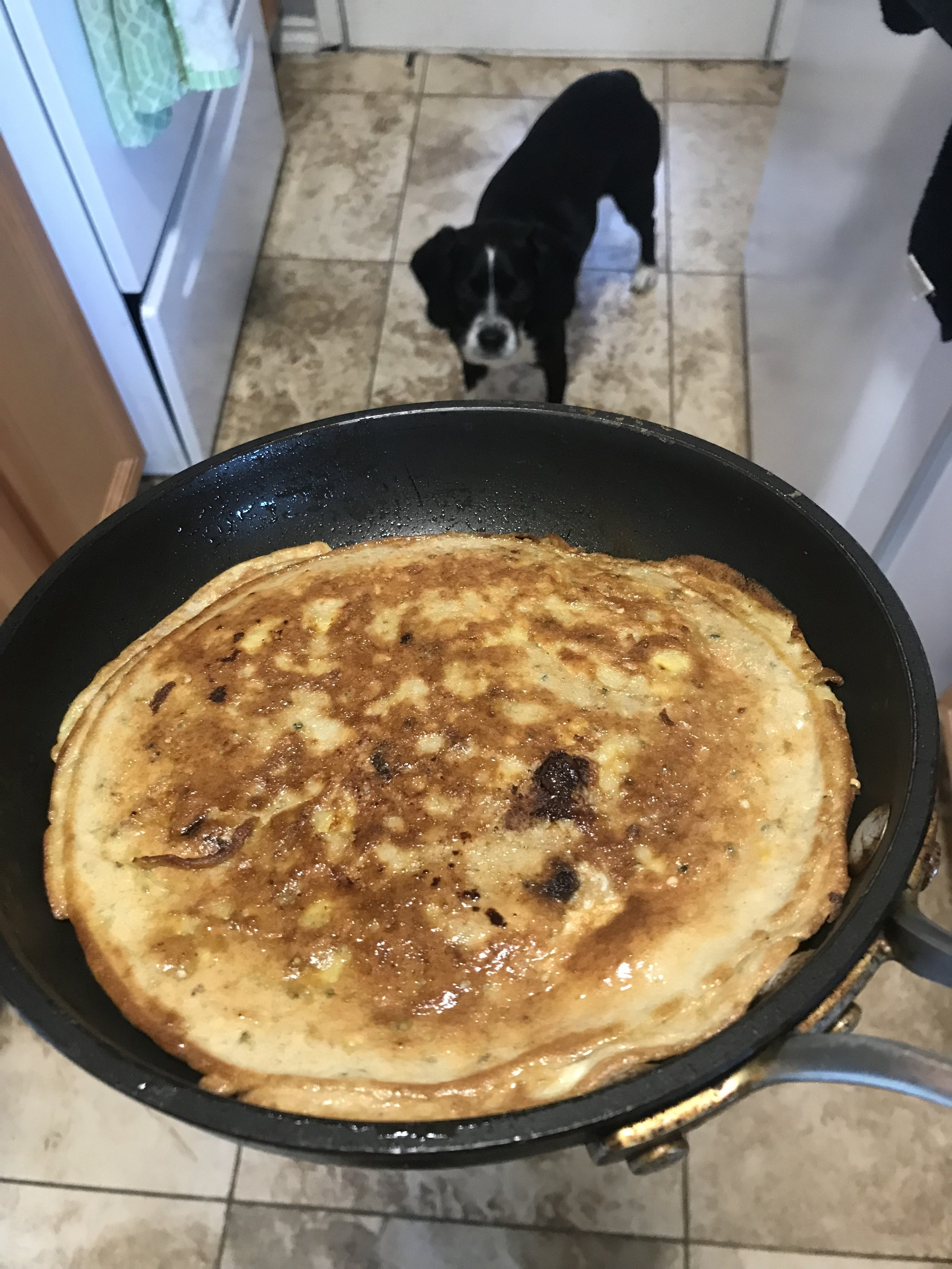 Boone the pup loves protein pancakes too!