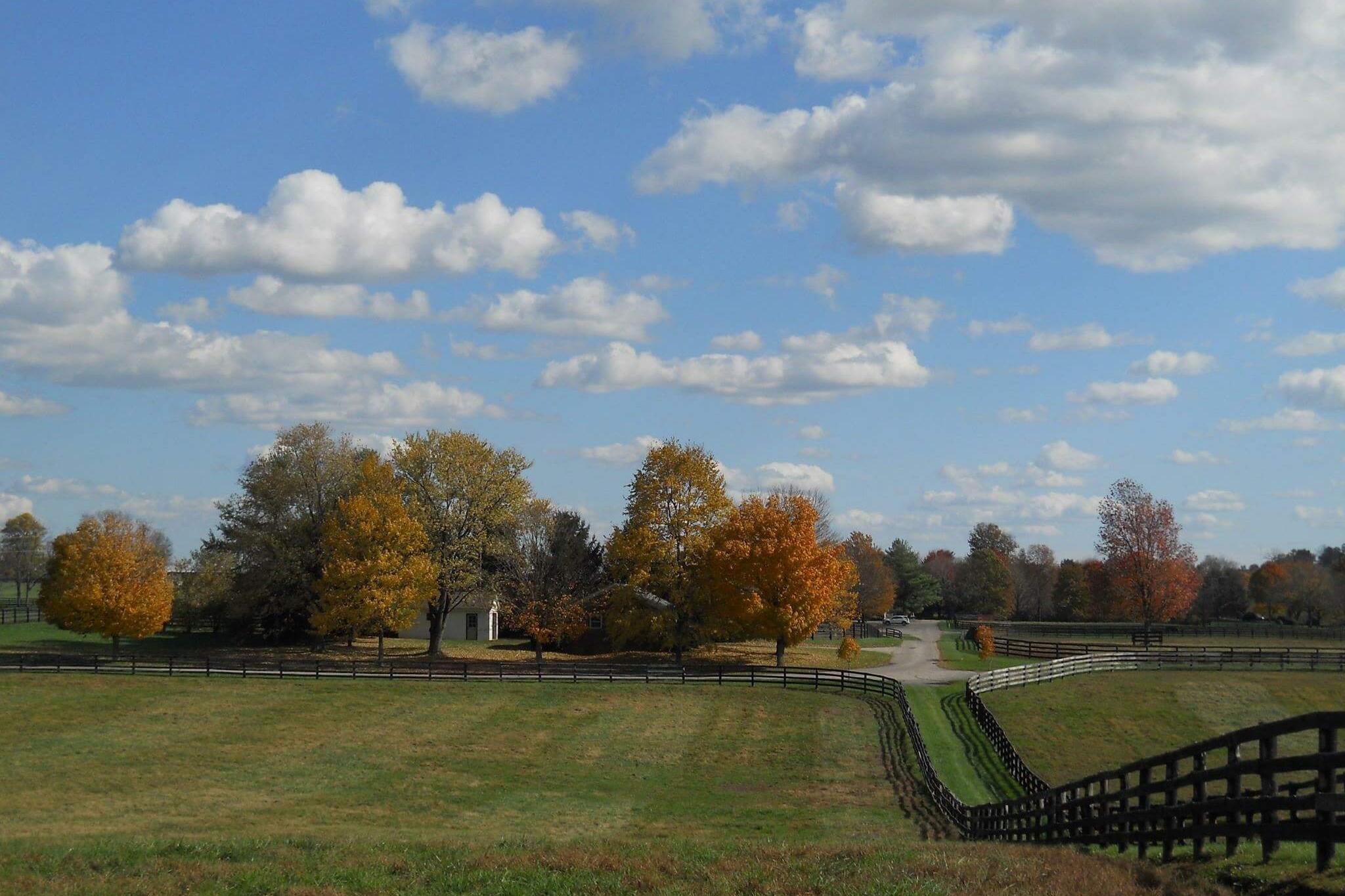Chesapeake Farm Klimt February 1.jpeg