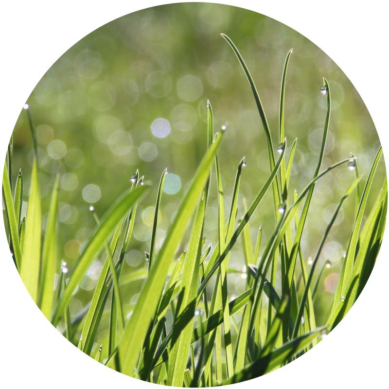 grass_circle.png