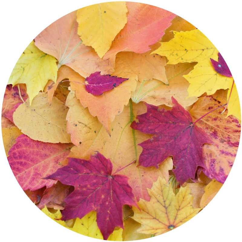 leaves_round.png