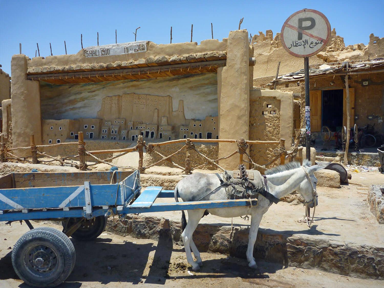 egypt-siwa-no-parking-donkey-oasis-downtown.jpg