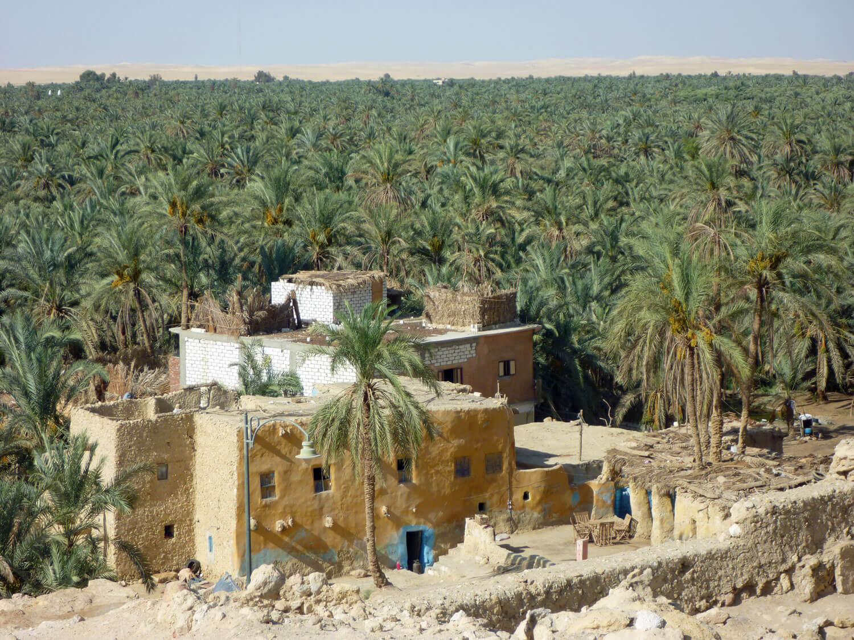 egypt-siwa-oasis-palm-grove.jpg