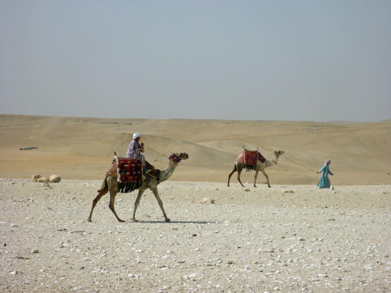 egypt-cairo-giza-pyramids-camels.jpg