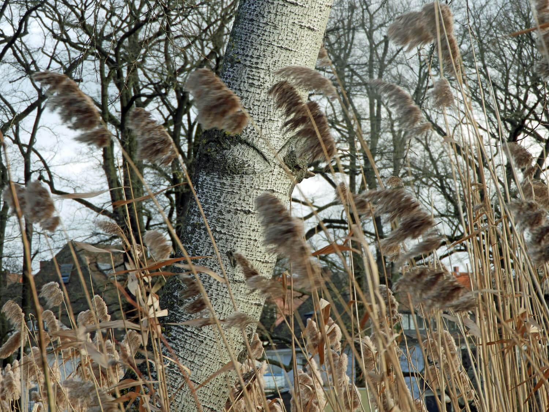 germany-nuremberg-nazi-parade-grounds-birch-wind.jpg