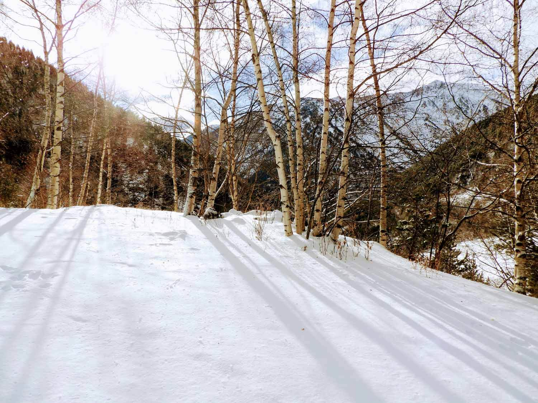 andorra-micro-nation-pyrenees-birch-snow-sun-shadow-photography.jpg
