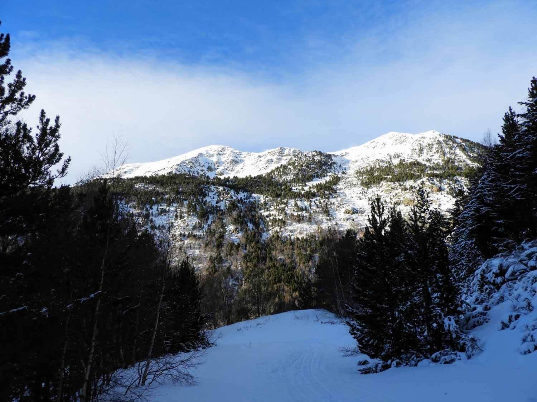 andorra-micro-nation-pyrenees-mountains-snow-pine.jpg