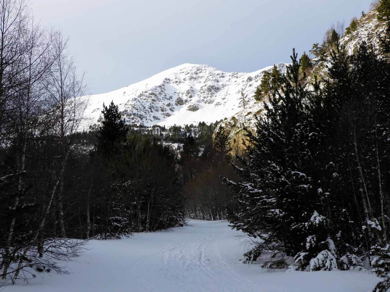 andorra-micro-nation-snow-hike-pyrenees-mountains-pine.jpg