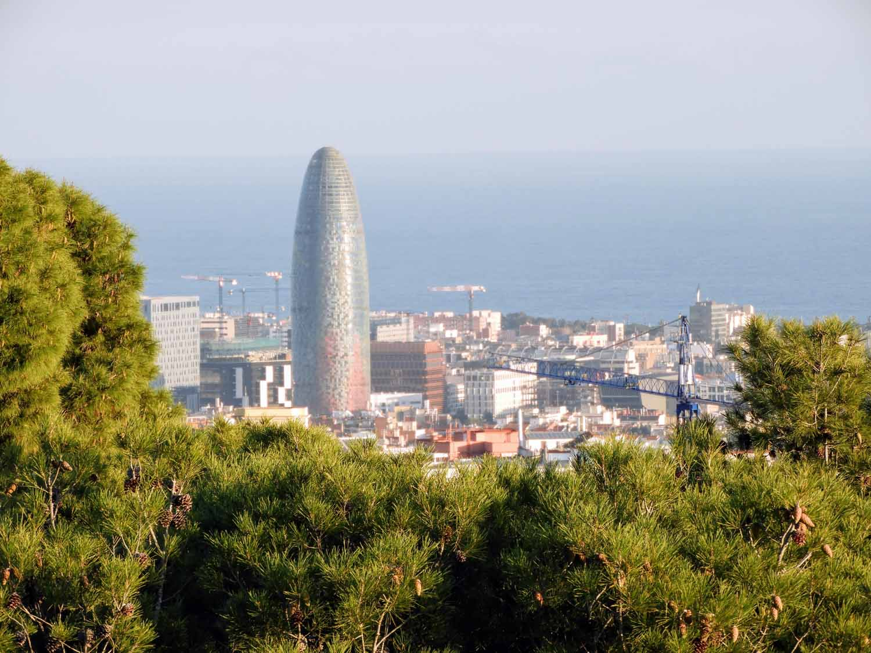 spain-barcelona-pinus-edulis-park-guell-tres-creus.jpg