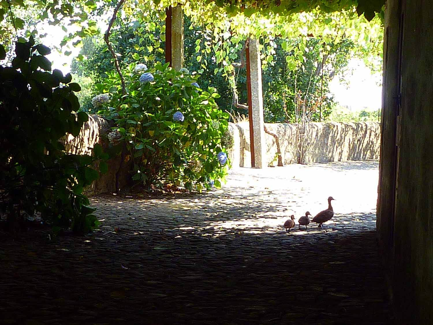 portugal-porto-oporto-museum-fundacao-foundation-serralves-ducks.JPG