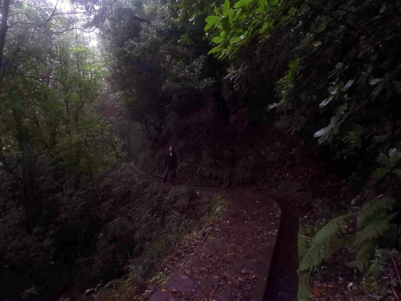 portugal-madeira-levada-cedros-trail.jpg