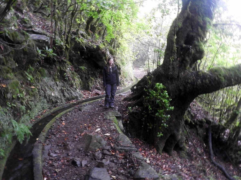 portugal-madeira-levada-cedros-trees-canal-hike-trail.jpg