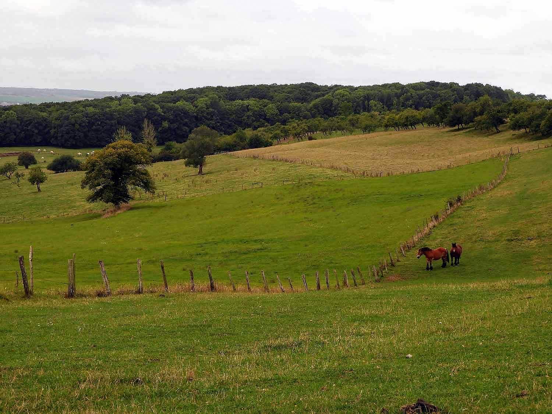 france-sion-basilica-green-fields.jpg