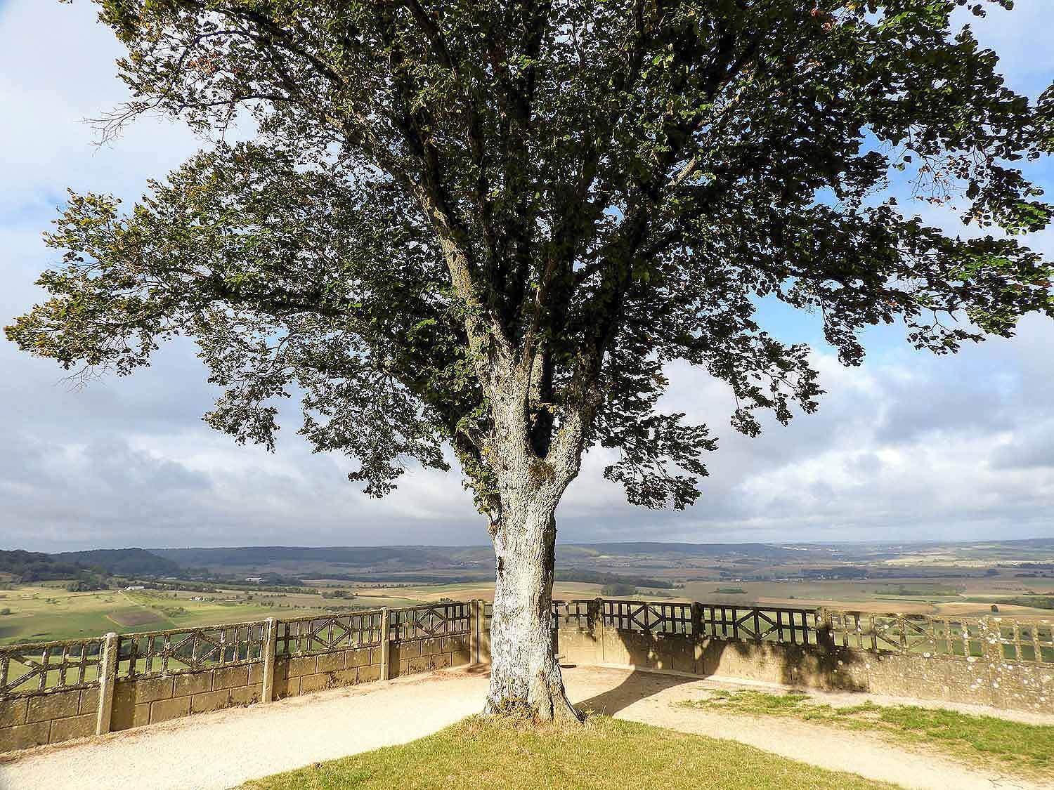 france-sion-basilica-lookout-overview-tree.jpg