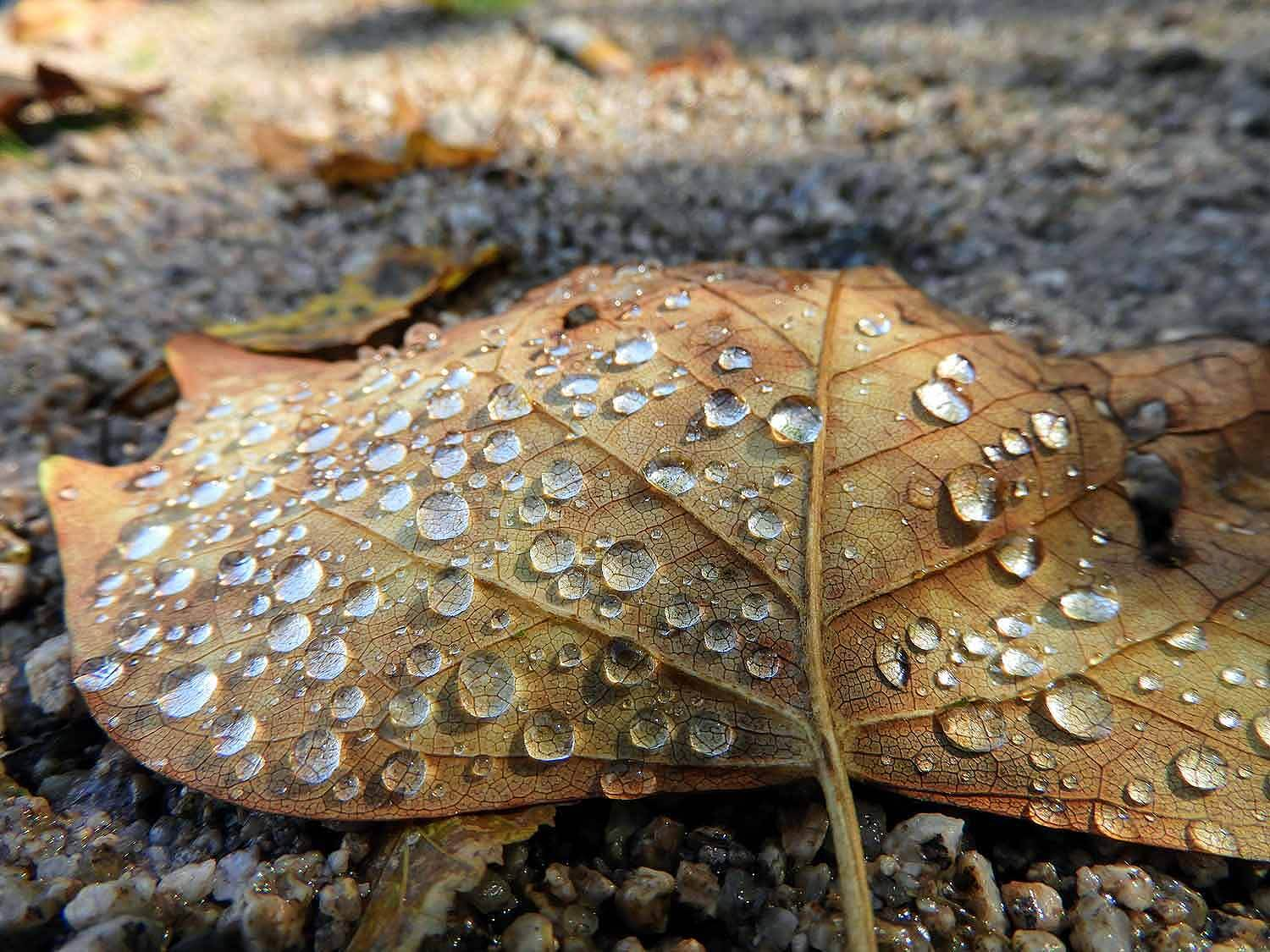 france-epinal-leaf-water-drops-macro-photography.jpg
