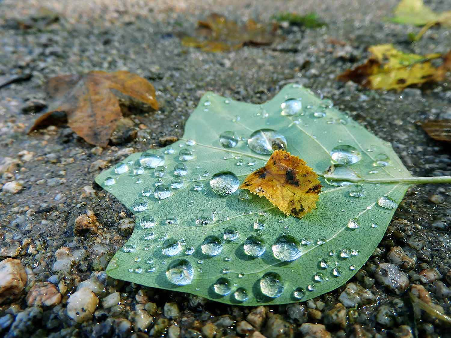 france-epinal-macro-photography-waterdrops.jpg