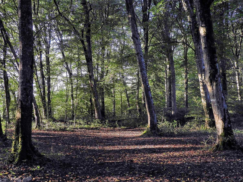 france-epinal-park-trees.jpg