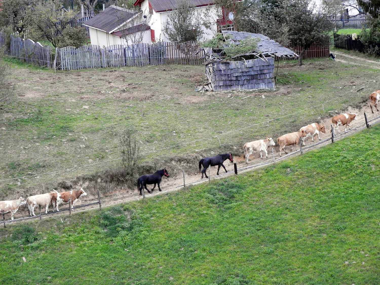 romania-bran-horses-parade.jpg