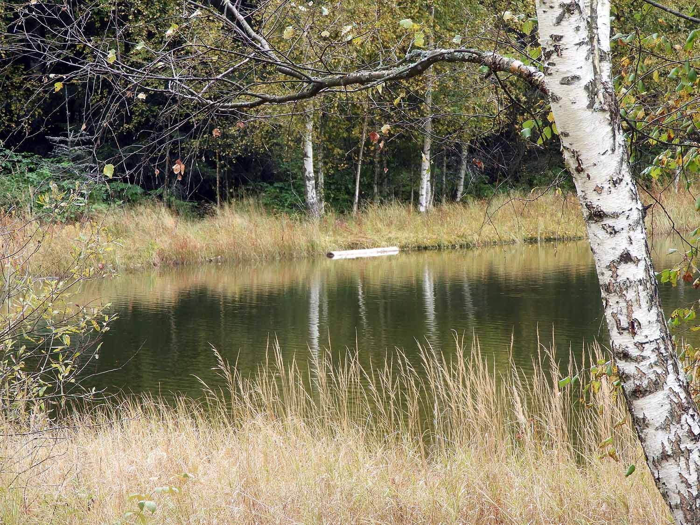 romania-lake-st-ann-birch-shore-forest.JPG
