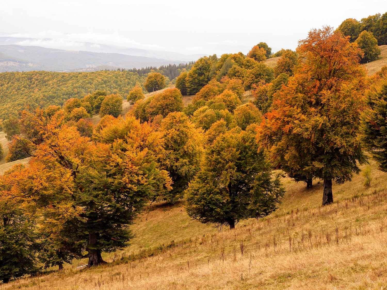 romania-saint-st-ann-crater-lake-trees-orange-yellow.jpg